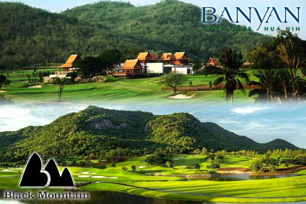 Banyan-black-mountain